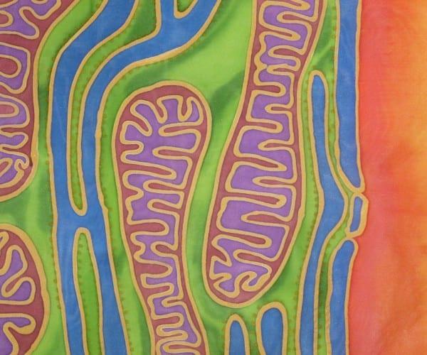 Mitonucleus by Odra Noel