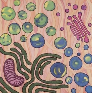 Variation on vacuoles: touch and go