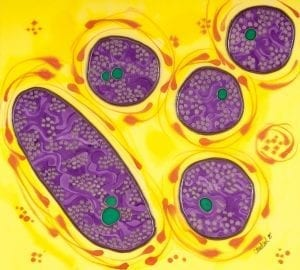 Purple bacteria I