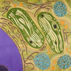 Partners in crime II – chloroplasts and mitochondria