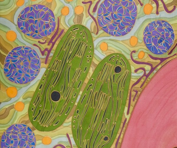 Partners in crime I – chloroplasts and mitochondria